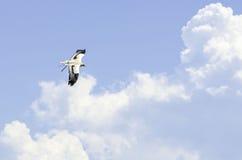 Летание хищника Стоковое Фото