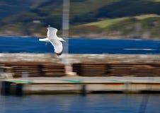 Летание чайки вдоль берега стоковая фотография rf