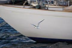 Летание чайки в гавани St Tropez стоковые фотографии rf