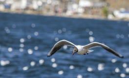 Летание чайки в небе стоковое изображение rf