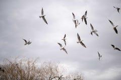 Летание чайки в небе Стоковые Фото