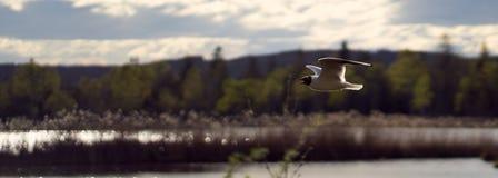 Летание чайки в прямой линии над причалить стоковое фото rf