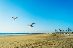 Летание чайки в пляже Ньюпорта стоковое фото rf