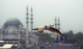 Летание чайки в Стамбуле Стоковые Изображения RF