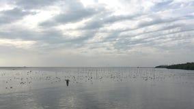Летание чайки, еда находки отсутствие звука видеоматериал