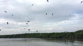 Летание чайки, еда находки отсутствие звука акции видеоматериалы