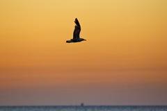 Летание чайки моря над морем Стоковые Изображения RF