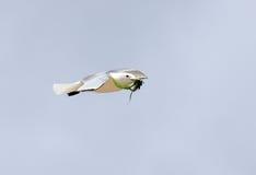 Летание чайки моря стоковые изображения