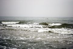 Летание чайки над морем Стоковая Фотография