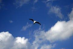 Летание чайки на голубой летний день стоковые изображения rf