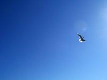 Летание чайки на голубой летний день стоковое изображение