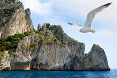 Летание чайки около острова Капри, Италии стоковая фотография