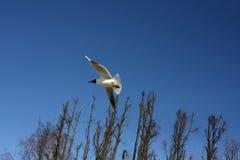 Летание чайки по побережью Стоковые Фото
