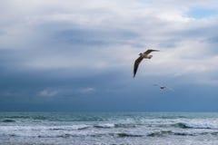 Летание чайки против голубого драматического облачного неба Стоковое фото RF