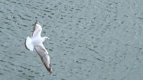 Летание чайки Стоковое Изображение RF