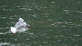 Летание чайки стоковые фотографии rf