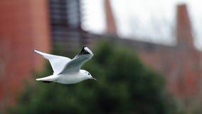 Летание чайки Стоковые Изображения