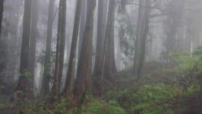 Летание через туманный лес Cypress в живописной местности Alishan с туманом и помохом в Тайване r видеоматериал