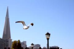 летание Стоковая Фотография