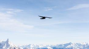 летание Стоковое Изображение