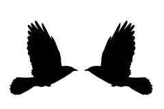 летание daw Стоковое фото RF