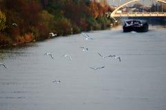 Летание seagul птицы Стоковое Изображение