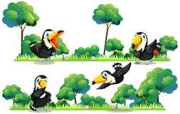 Летание Toucans в саде бесплатная иллюстрация