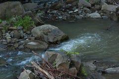 Летанный водой Стоковые Изображения