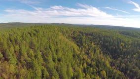 Летать высоко над большим елевым лесом дерева сток-видео
