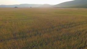 Летать в воздух над пшеничным полем видеоматериал