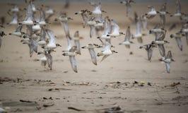 Летать в пляж Стоковые Изображения
