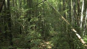 Летать в тропический тропический лес Georgia акции видеоматериалы