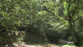 Летать в тропический тропический лес Georgia сток-видео