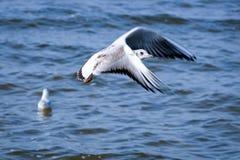 Летать мяукает стоковая фотография rf