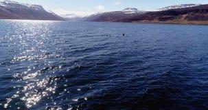 Летать над утками Eider в красивом фьорде в Исландии видеоматериал
