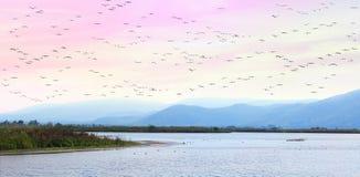 Летать на заход солнца Стоковая Фотография