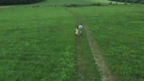 Летать над зеленым полем куда любовники идут Авиационная съемка допустимого предела где бег женщины и человека Поле Авиационная с видеоматериал
