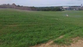 Летать над зеленым полем куда любовники идут Авиационная съемка допустимого предела где бег женщины и человека Поле Авиационная с акции видеоматериалы