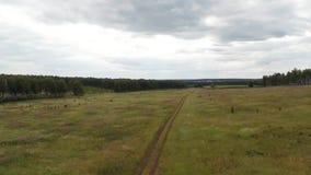 Летать над полем Воздушная съемка сток-видео