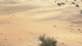 Летать низко над песчанными дюнами акции видеоматериалы