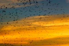 летать птиц Стоковая Фотография
