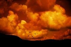 летать птиц Стоковое фото RF