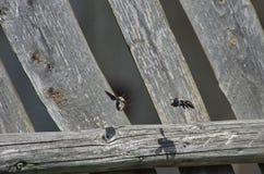 Летать пчел Стоковые Фотографии RF
