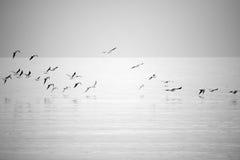 Летать чаек моря Стоковое Изображение RF