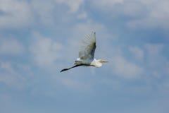 Летать через небо Стоковые Изображения RF