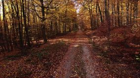 Летать через осенний лес - вид с воздуха сток-видео