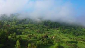 Летающ над изумительным дождевым лесом, вид с воздуха над дождевым лесом с туманом на восходе солнца воздушное видео 4K, акции видеоматериалы