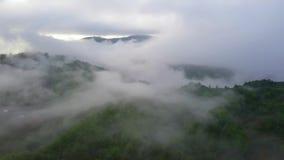 Летающ над изумительным дождевым лесом, вид с воздуха над дождевым лесом с туманом на восходе солнца воздушное видео 4K, сток-видео