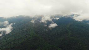 Летающ над изумительным дождевым лесом, вид с воздуха над дождевым лесом с туманом на восходе солнца 4K воздушное видео, дождевой сток-видео