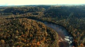 Летающ над рекой и золотым лесом Sigulda осени, Латвия сток-видео